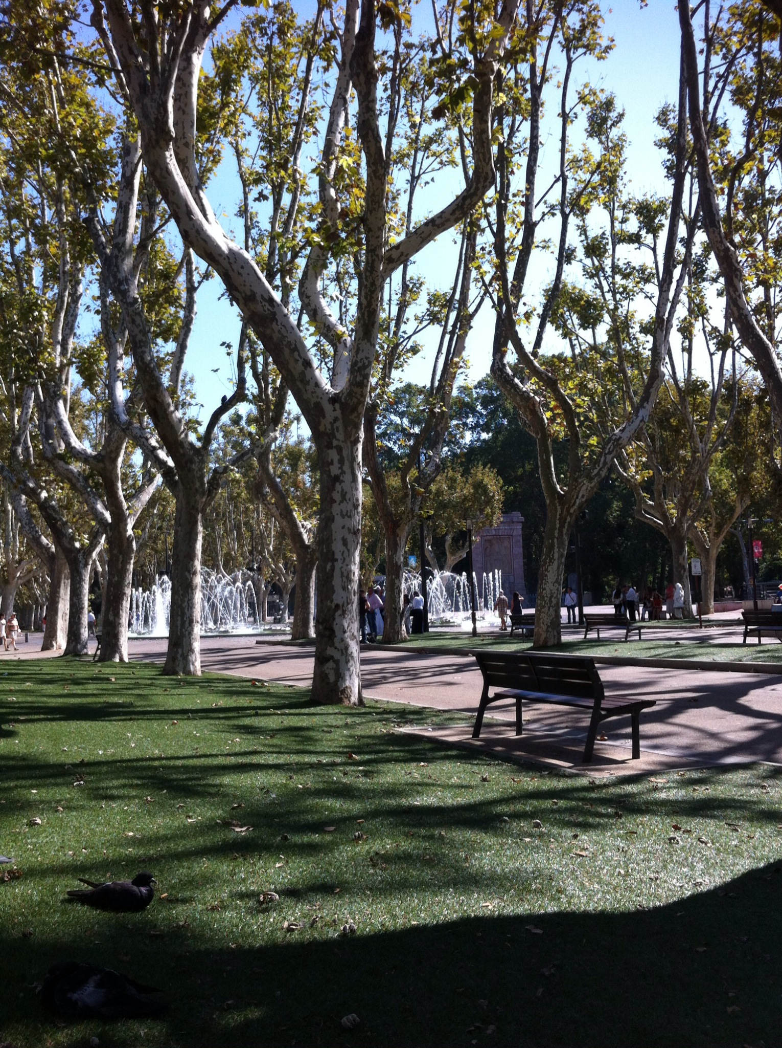 Trees and fountains in Perpignan